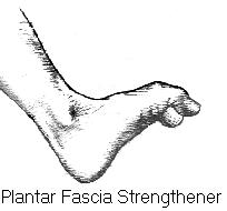Plantar Fascia Strenghtener Institute for Physical and Sports Therapy